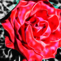 Red Rose Fractal by Tracey Everington