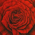 Red Rose II by Rowena Finn