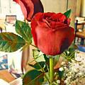 Red Rose by Jim Thomas