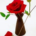 Red Rose by Mioara Andritoiu