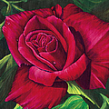 Red Rose by Nancy Cupp