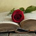 Red Rose On An Old Big Book by Jaroslaw Blaminsky