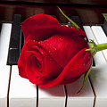 Red rose on piano keys by Garry Gay