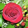 Red Rose by Pamela Walrath