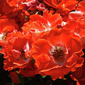 Red Roses Botanical Landscape 1 Red Rose Giclee Prints Baslee Troutman by Baslee Troutman
