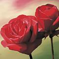 Red Roses by Jan Baughman