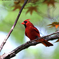 Red Sentry by Alan Look
