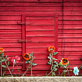Red Sided Wall by Ava Peterson