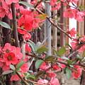 Red Spring by David Du Hempsey