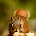 Red Squirrel   by Cale Best