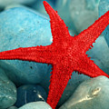 Red Starfish by Gina Cormier