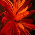 Red Sunflower 1 by Melanie Rainey