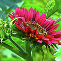 Red Sunflower by Sharon Talson