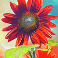 Red Sunflowers At Sundown by Regina Geoghan