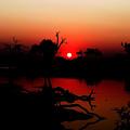 Red Sunset by Robyn R Hazen