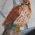 Red Tail Hawk by Emmanuel Turner