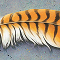 Red Tail Hawk Feather by Tish Wynne