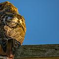 Red Tailed Hawk  IIi  by Ronald Raymond