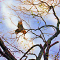 Red Tailed Hawk by Jan Amiss Photography