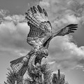 Red Tailed Hawk Wings Bw by Rick Mosher