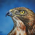 Red-tailed Hawk......honor by Bob Williams