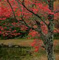 Red Tree II by Gary Lengyel