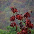 Red Tree In The Rain by Michael Thomas