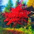 Red Tree by Ronda Broatch