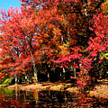 Red Trees By Lake by Susan Savad