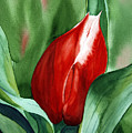 Red Tulip 2 by Julie Pflanzer