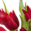 Red Tulip Heads Sprinkled by Arletta Cwalina