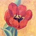 Red Tulip by Mary Ann Clady