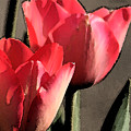 Red Tulips  by Melanie Rainey