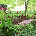 Red Tulips by Nereida Slesarchik Cedeno Wilcoxon