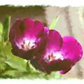Red Tulips by Patty Muchka