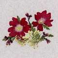 Red Verbena Pressed Flower Arrangement by Em Witherspoon