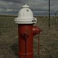 Red  White Hydrant by Sara Stevenson