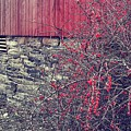 Red Winter by JAMART Photography