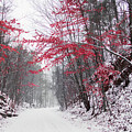 Red Winter Path by Parker Cunningham