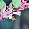 Red Yucca And Bee by Marcia Breznay