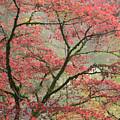 Red Zen by Don Schwartz