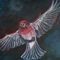 Redbird by Sylvia Stone
