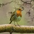 Redbreast Bird by Movie Poster Prints