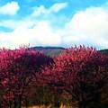 Redbud In The Blue Ridge by Kathy Barney