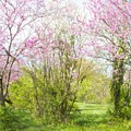 Redbud Trees 4 by Chris Scroggins