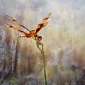 Reddish Dragonfly by Charles McKelroy