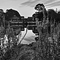 Redd's Pond Lupines Sunrise Black And White by Toby McGuire