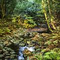 Redwood Creek Autumn At Muir Woods by Brian Tada