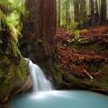Redwood Forest Waterfall by Matt Tilghman