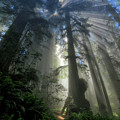 Redwood God Rays by Greg Norrell
